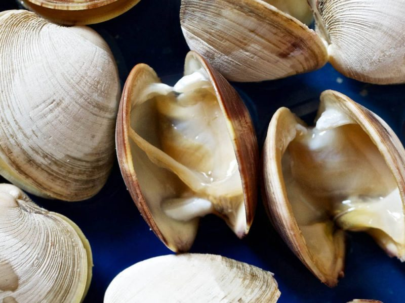 A Guide to Clam Types in The U.S.