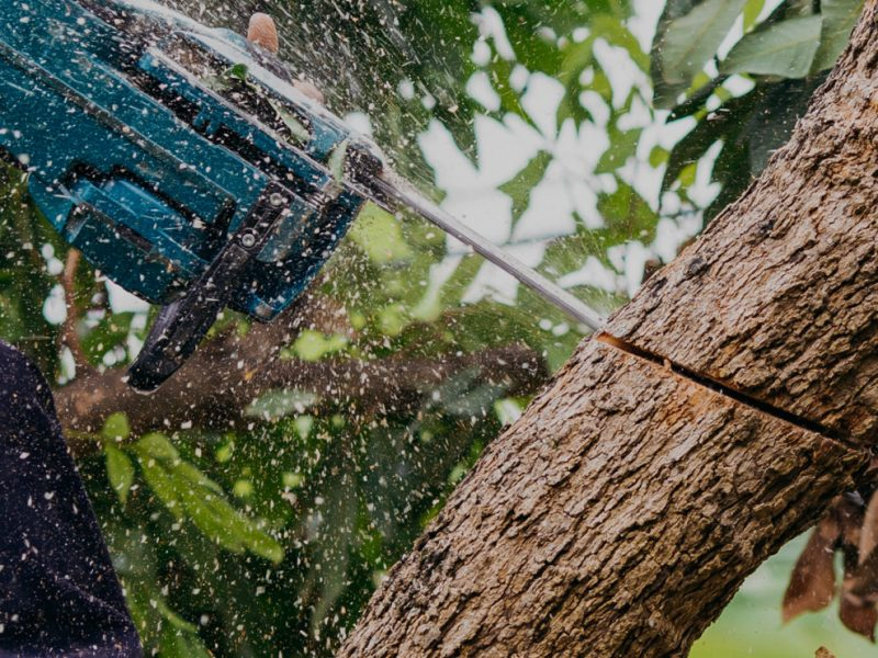 Strategic Tree Lopping Techniques For Your Residential Property