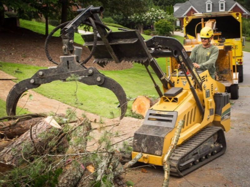 Professional Tree Care Services in Your Area