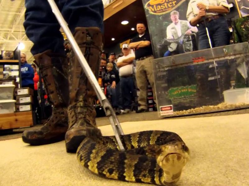 Why You Should Use Snake Proof Boots Even Around Non-Lethal Snakes