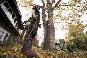 davey tree service employment