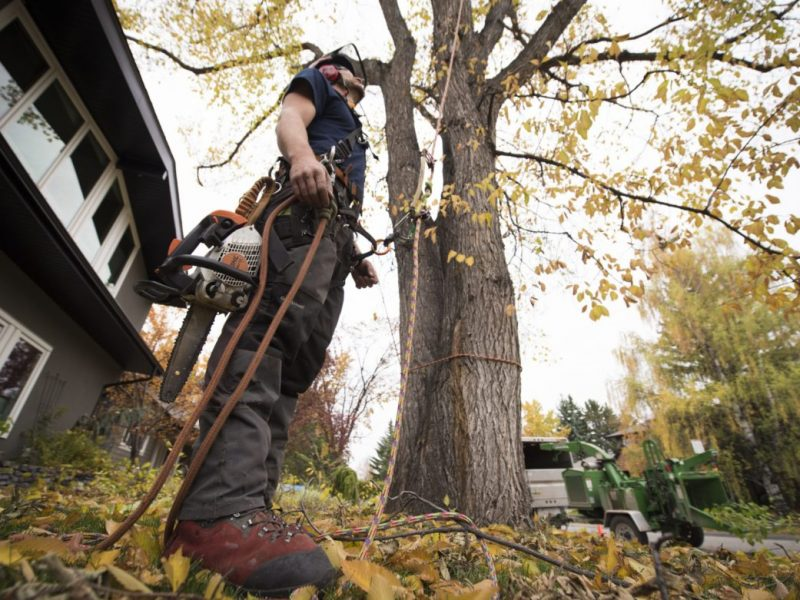 Benefits of Tree Pruning
