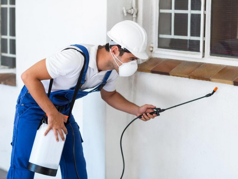 What to Know About Pest Control Services