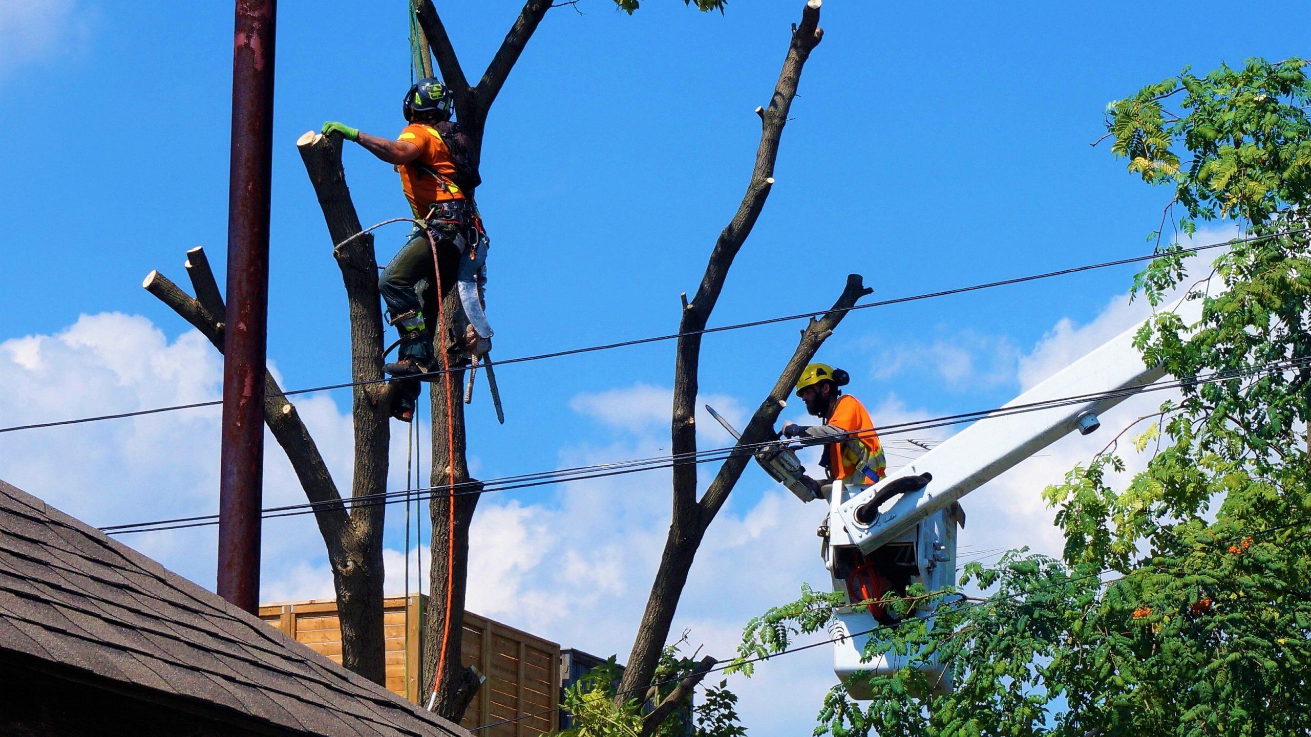 arborist tree service