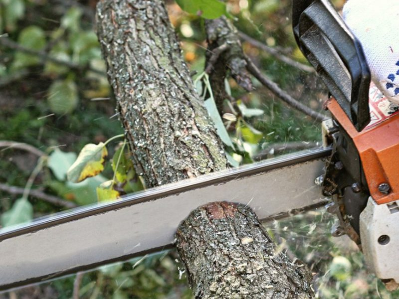 What to Do If You Don't Know Much About Tree Service