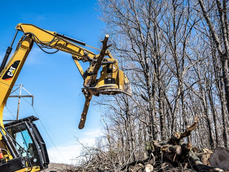 What to Ask When Looking For a Good Tree Removal Company