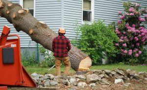 tree removal cost near me