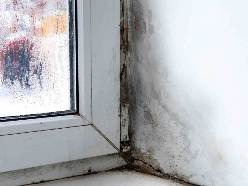 How Mold Can Affect The Value of Your Property