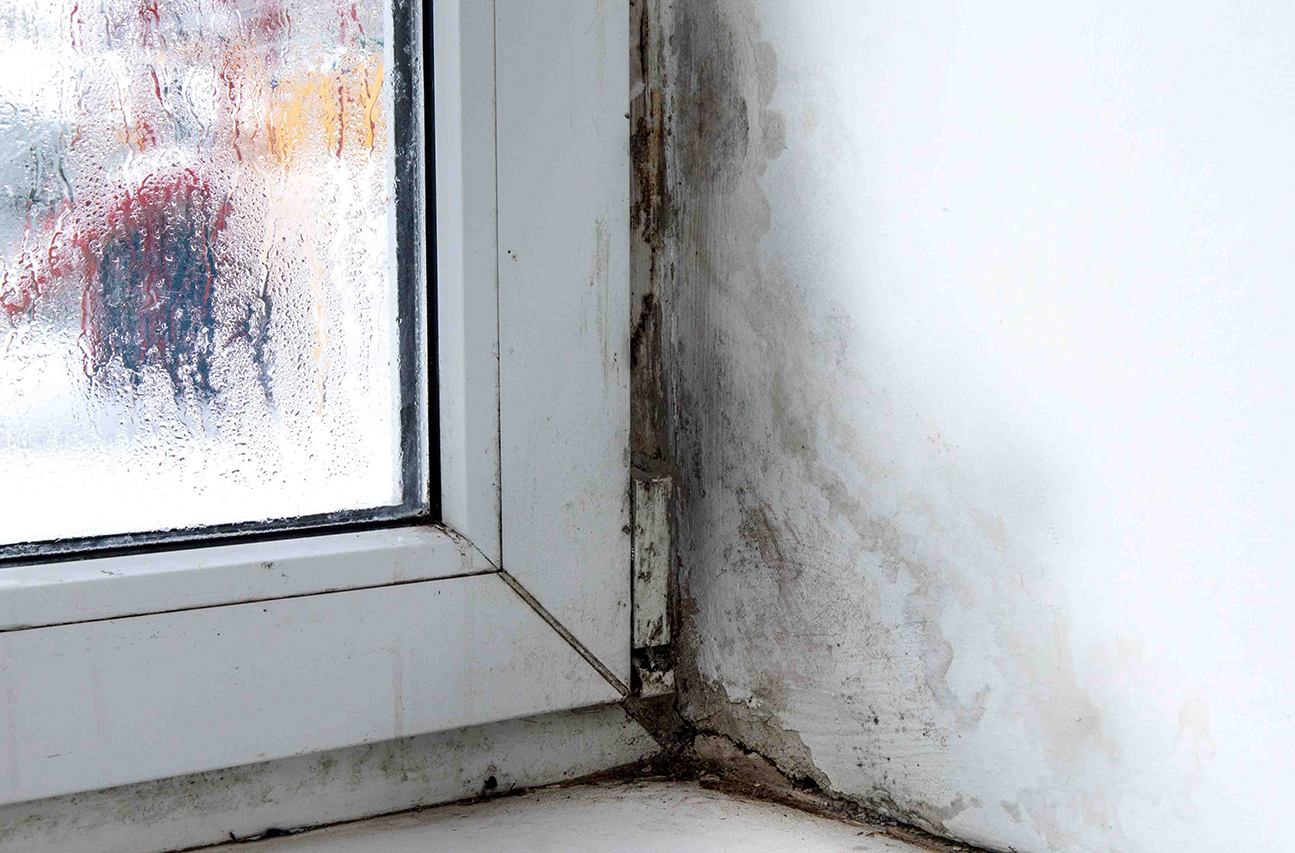 mold poisoning symptoms in humans