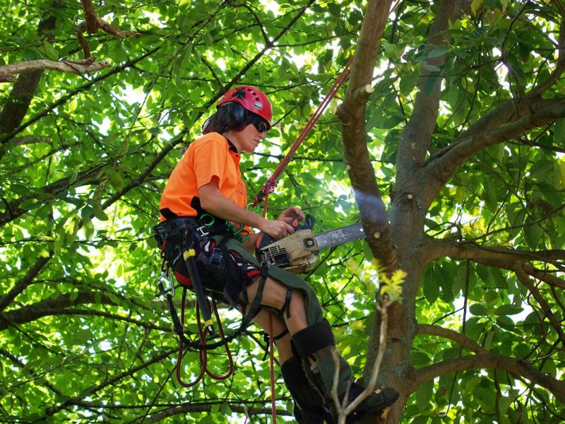 Benefits of a Good Tree Removal Service