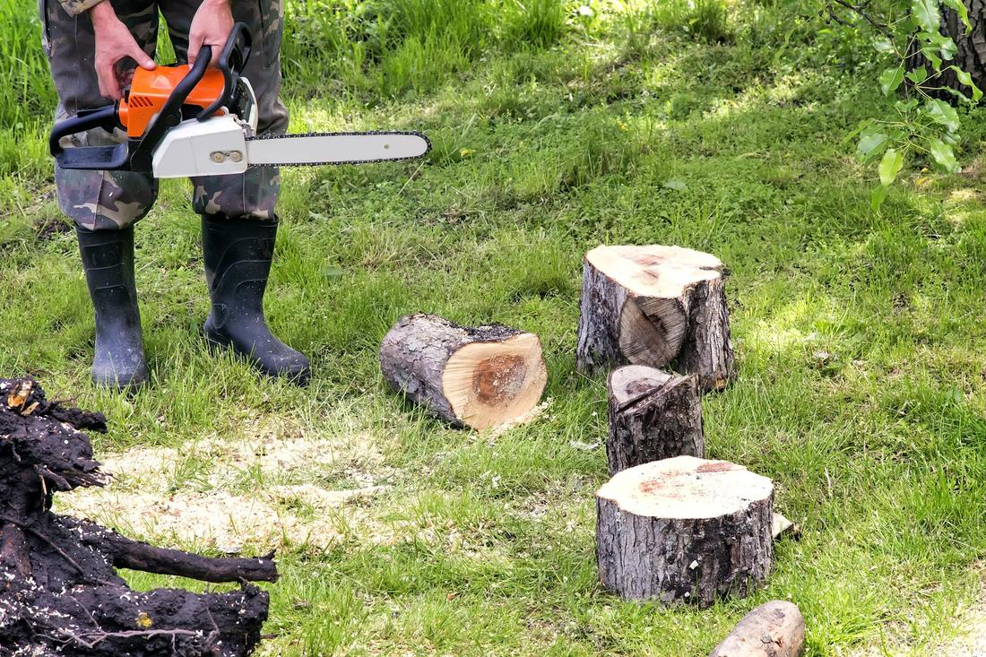 local tree removal companies near me